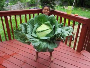 Leo with cabbage