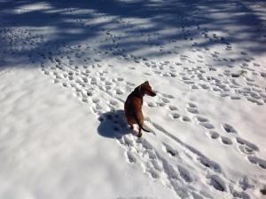 Peanut Snow 2014 January