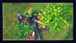 master gardner plant sale 2014 2